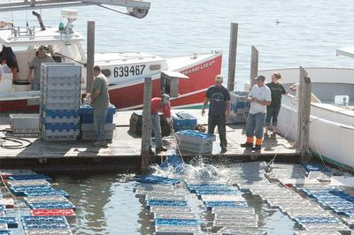 Stonington lobster landings