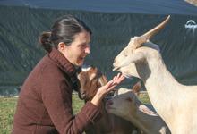 Hello, goats