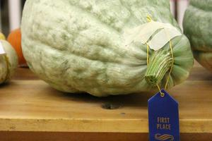 Blue ribbon winner
