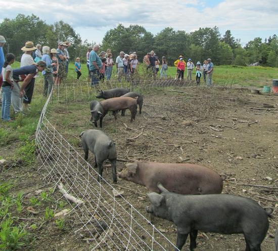 Pigs of Horsepower Farm