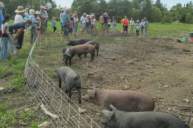 Pigs of Horsepower Farm