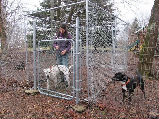 Peace Ridge Sanctuary's dog run