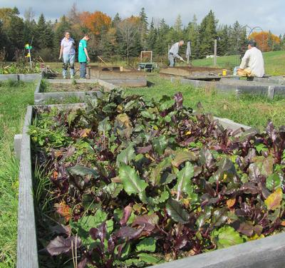 Volunteers make progress in school garden rejuvenation castine patriot penobscot bay press - Gardening works in october winter preparations ...