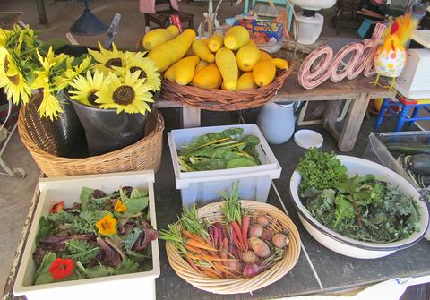 Vegetables at the Salt Run farmstand