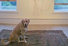 A dog pauses to ponder conceptual art