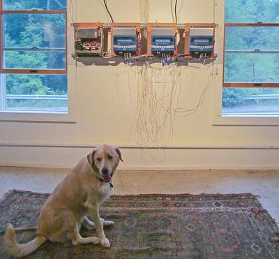A dog pauses to ponder conceptual art