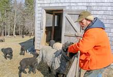 Tending to his flock