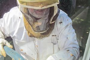 Peter Cowin  removes bees using a vacuum apparatus