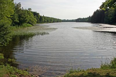 The Lily Pond in Deer Isle