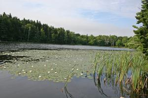 A view of Lily Pond in Deer Isle, Maine