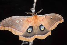 Island Heritage Trust sponsors National Moth Week event
