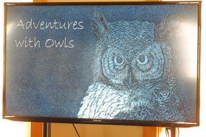 Experiencing Owls