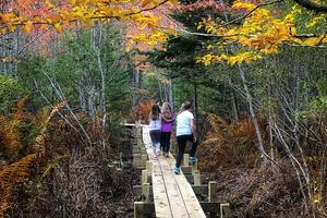A fall hike