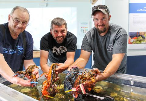 Rare lobsters