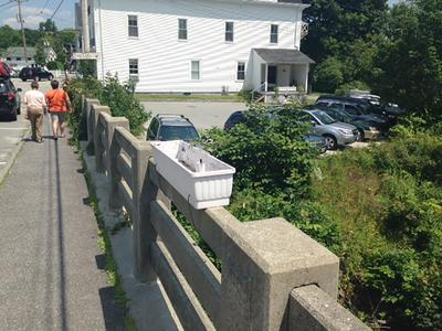 Blue Hill flowerboxes vandalized