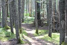 Greenbie path