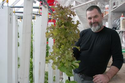 Vertical towers for lettuce plants