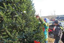 Surry tree decoration