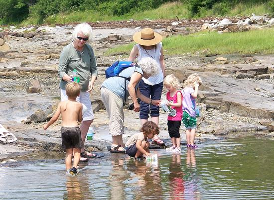 Life in a tide pool at Carter's Nature Preserve