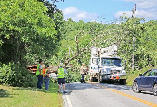 Tree crashes across Graytown Road
