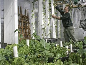 Sean Dooley uses aquaponic, vertical growing in Blue Hill