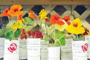 Nasturtiums on display