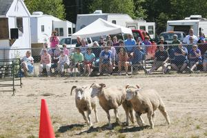 The Blue Hill Sheep Dog Trials