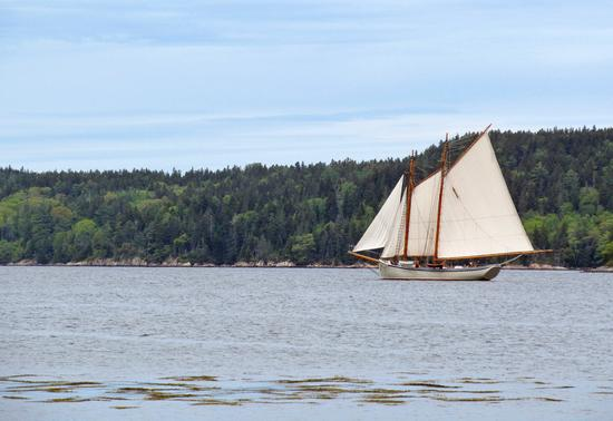 A sailboat traverses Eggemoggin Reach