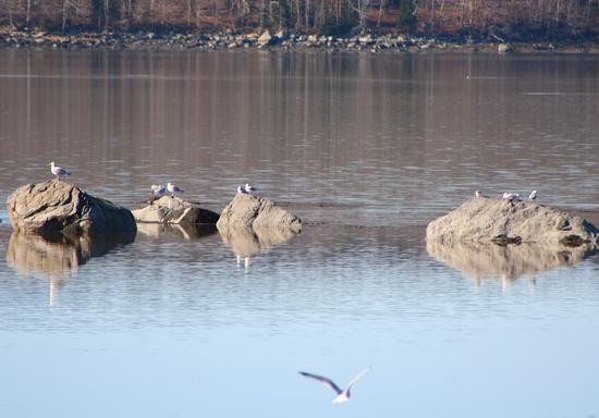Rocks, birds and water in Penobscot