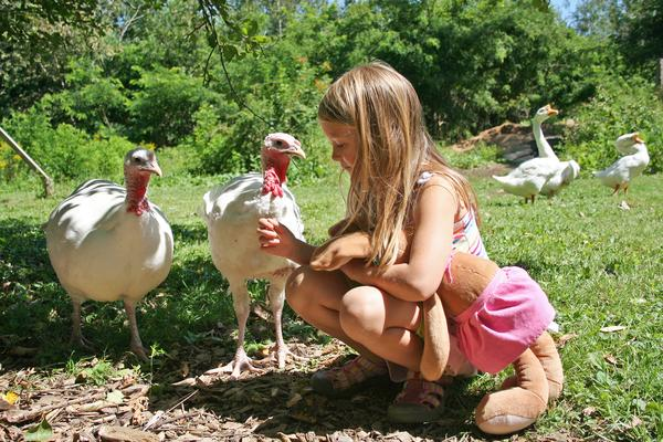 Fiona, Popcorn and Ava Tessier at Peace Ridge Sanctuary in Penobscot