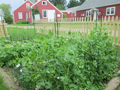 Deer Isle historical society replicates wartime garden | Island Ad ...