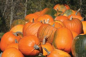 Pumpkins at Homewood Farm