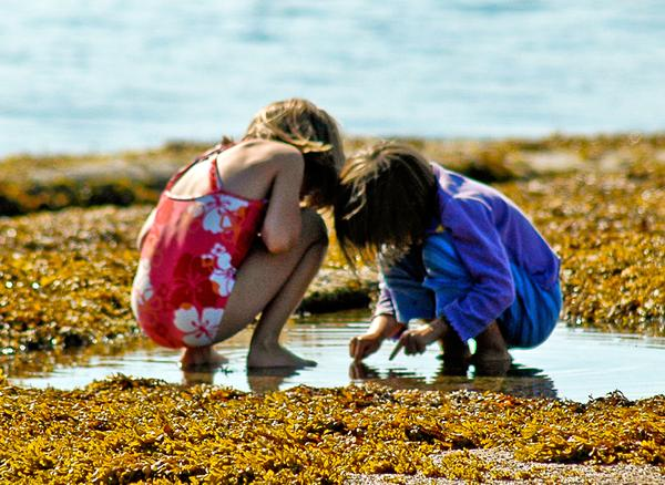 Tide pools are great places for kids to explore
