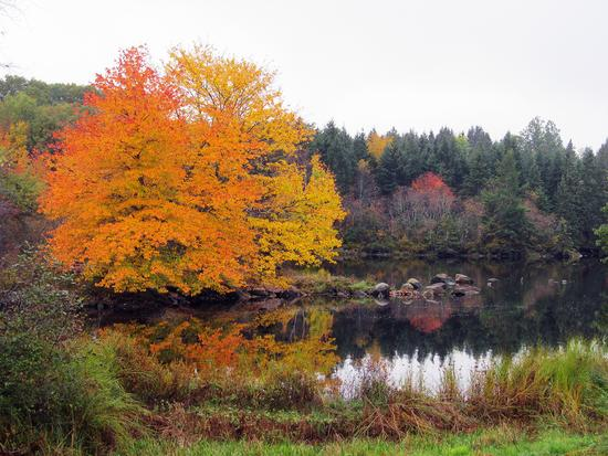 Fall foliage in Deer Isle