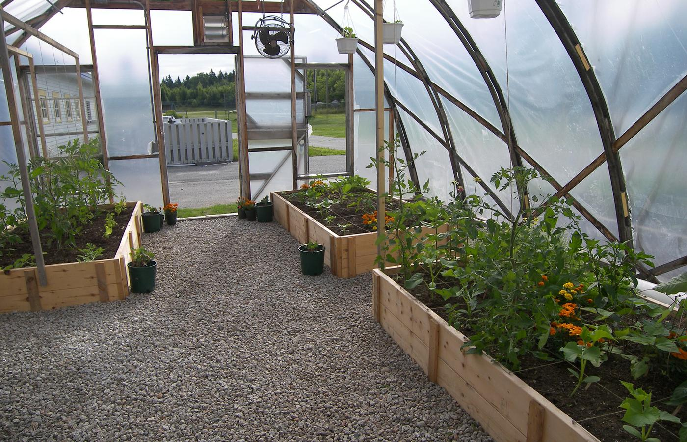raised beds in the greenhouse photo penobscot bay press