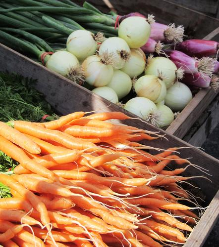 Celebrate the local harvest at the Stonington Local Foods Festival