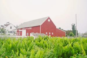 The Amen Farm