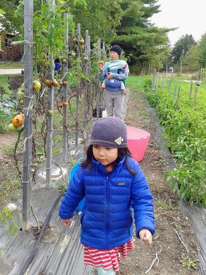 Zoe and Tammy Vu visit Clayfield Farm to glean vegetables