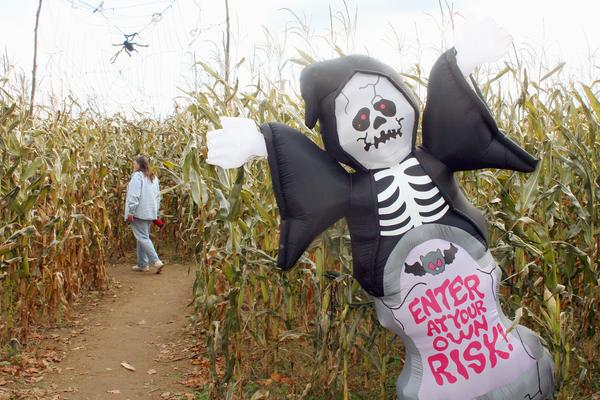 Homewood Farm Corn Maze in Blue Hill