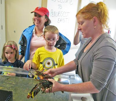 Penobscot East Community Liaison Holly Eaton with a lobster in the touch tank